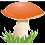 Prírodné huby